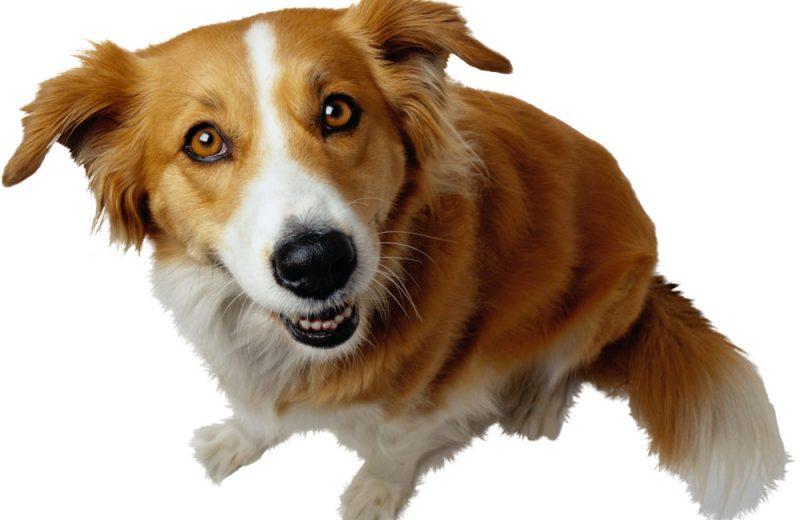 Collares perros portada