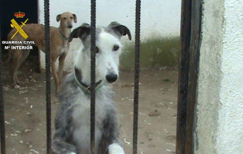 Clausurada una perrera clandestina e intervenidos un centenar de perros