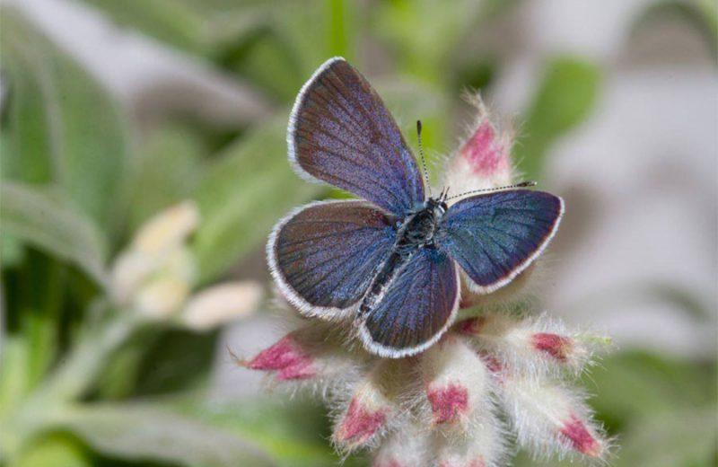 Así evolucionan los colores de las mariposas