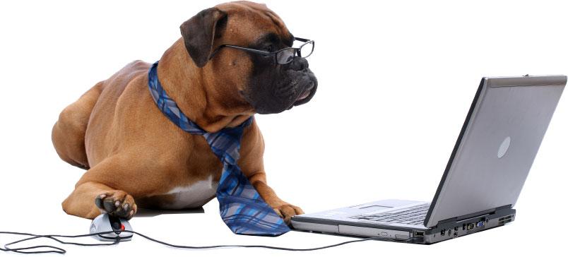 Perro ordenador