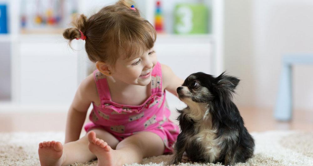 Perro juega con niña