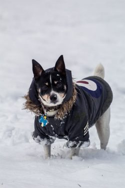 Perros invierno