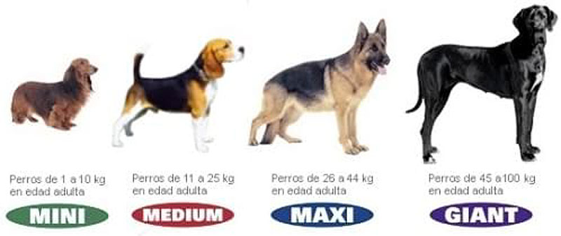 Piensos Royal Canin