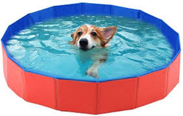 Piscina para perros - Refrescar a tu perro en verano