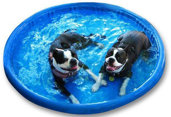 Piscinas rígidas para perros