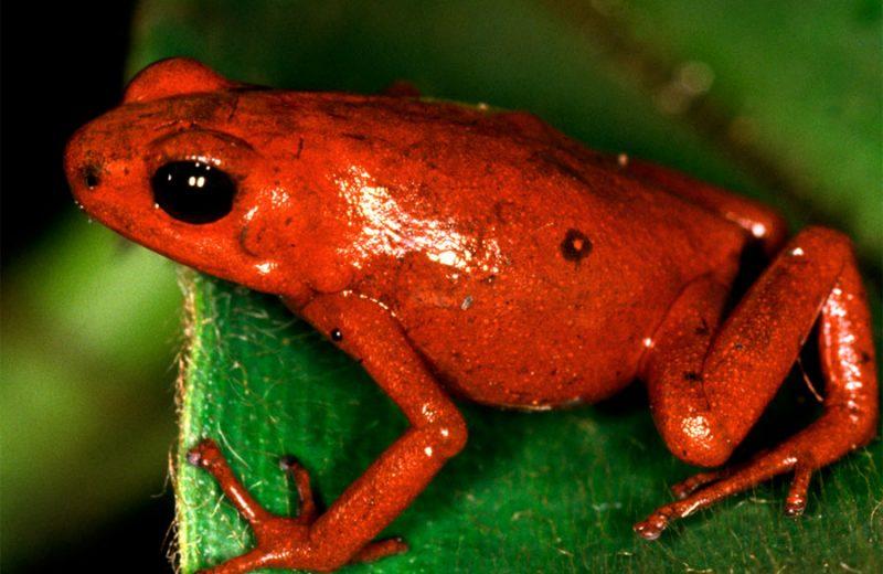 ¿Por qué los colores intensos en algunos seres vivos son advertencia de ser peligrosos?