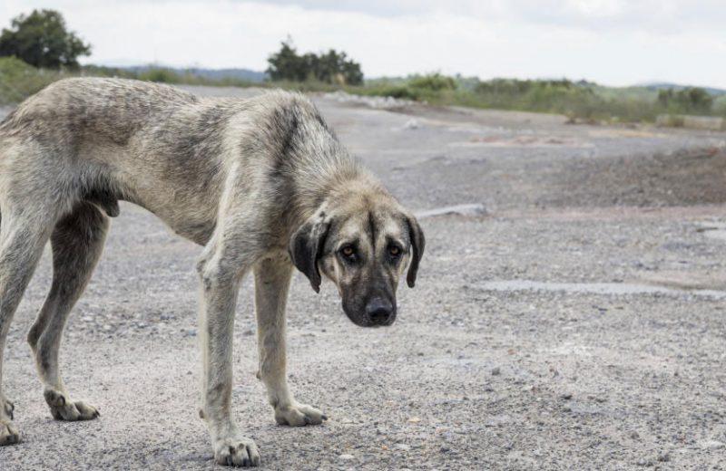 Bienestar animal: escala para la valoración de la condición corporal, cuidado físico, del ambiente y el entorno en perros