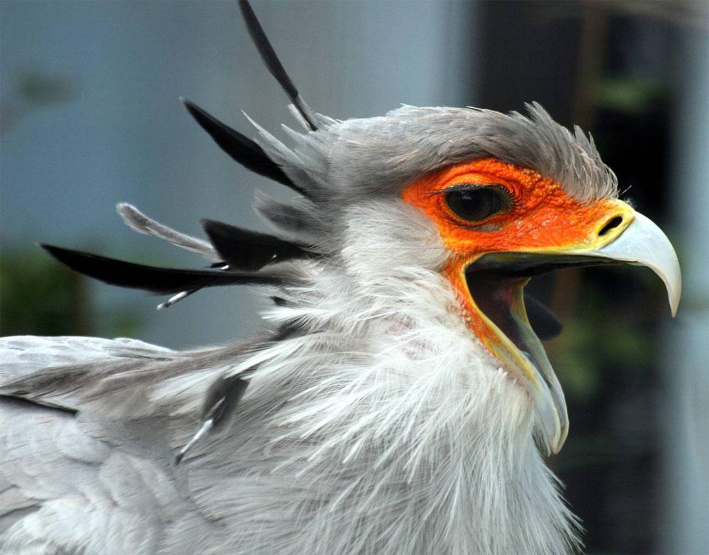 Pájaro secretario