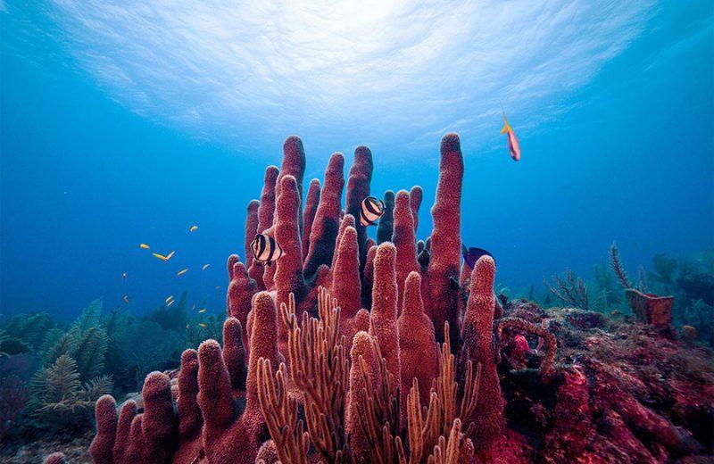 Los microbios que habitan en los corales ayudan a mantener la salud de los arrecifes