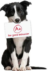 Buena educación perros