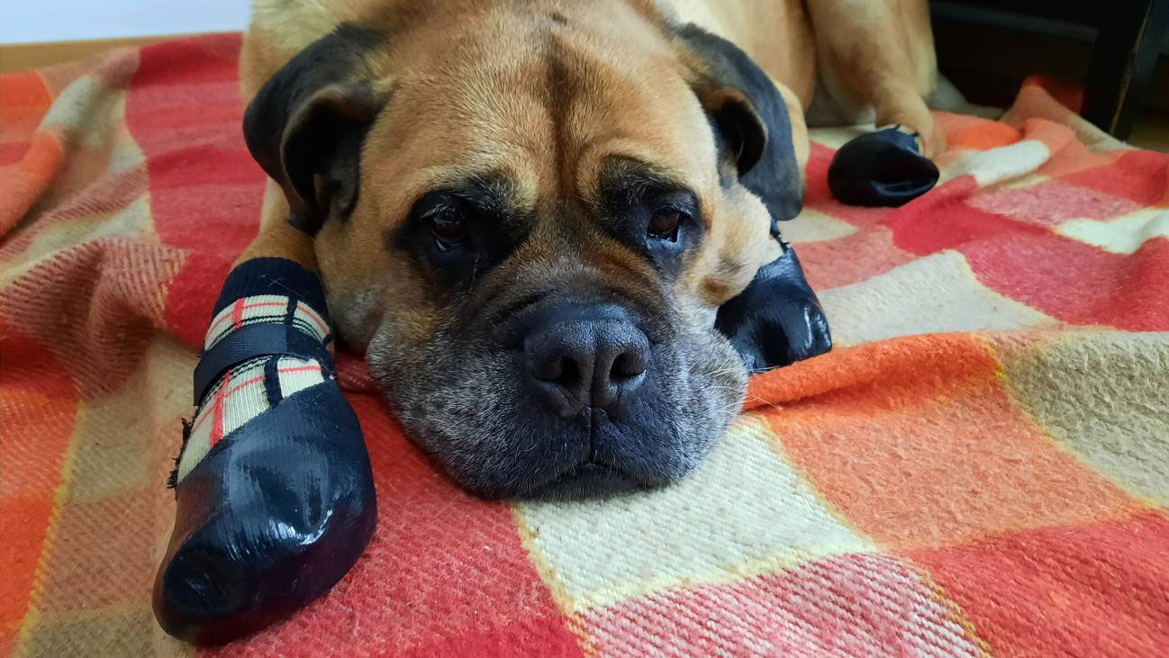 Calcetines goma perros