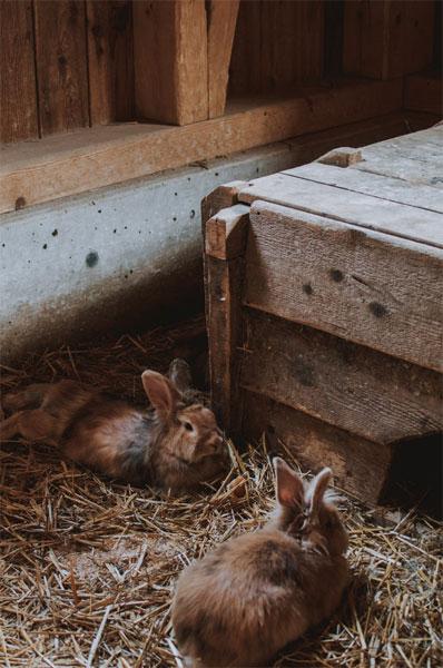 Conejos refugio