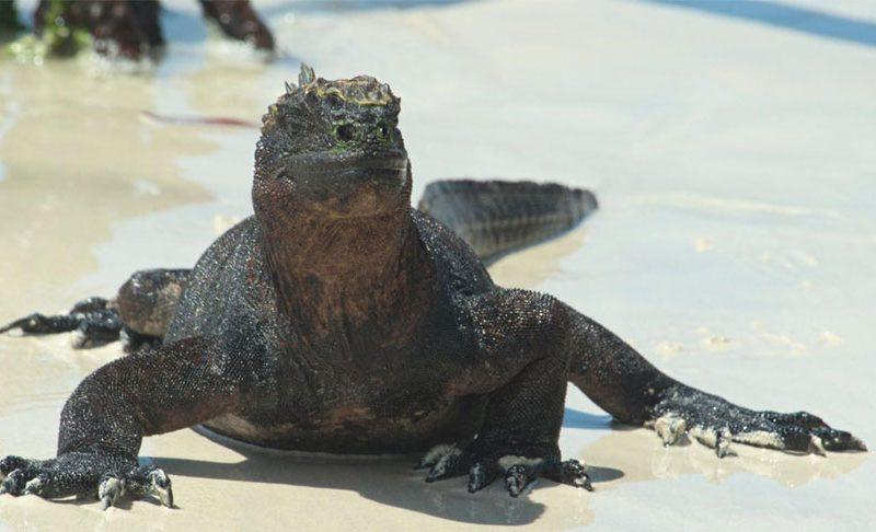 El secreto del rico ecosistema de Galápagos por fin desvelado
