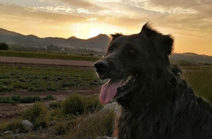 Jack, un tranquilo perro que paseaba por una pista forestal disparado por un cazador