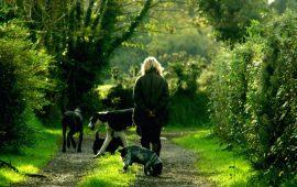 Violencia de género en el ámbito familiar contra personas y animales
