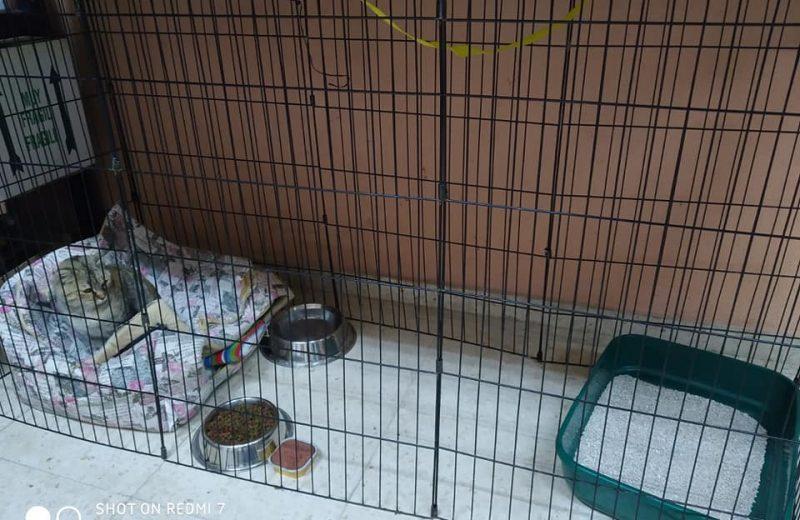 511 perros encuentran un hogar gracias a las voluntarias de Baza