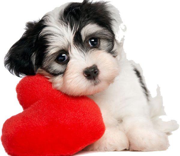 Perros con juguetes