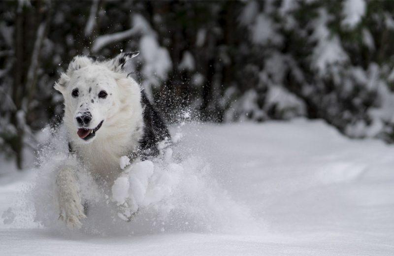 Claves para pasear a tu perro de forma segura tras Filomena