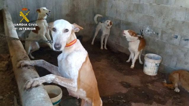 Perros de caza recuperados