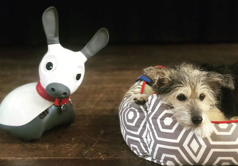 Robots y perros