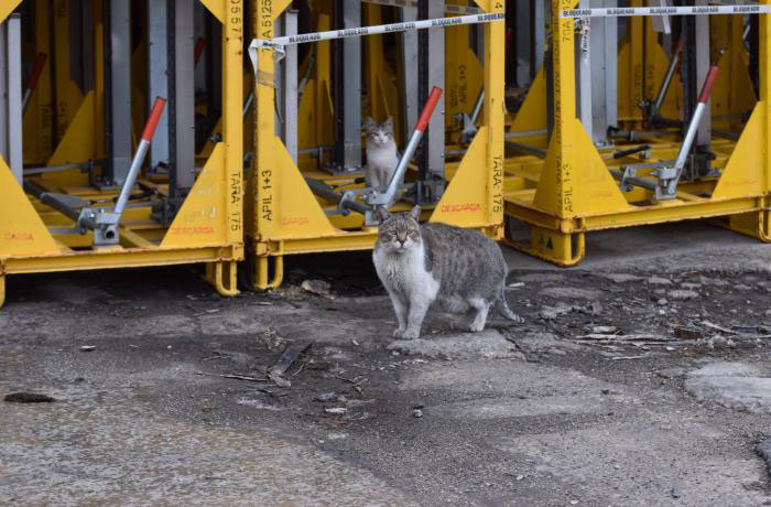 SEAT impide la gestión ética de los gatos de su fábrica de Zona Franca en Barcelona