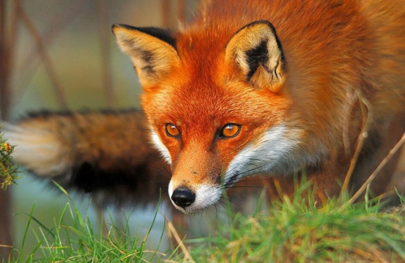 El diputado Xavier Eritja, de APDDA, solicita al Gobierno medidas para proteger a los animales salvajes del envenenamiento por cebos