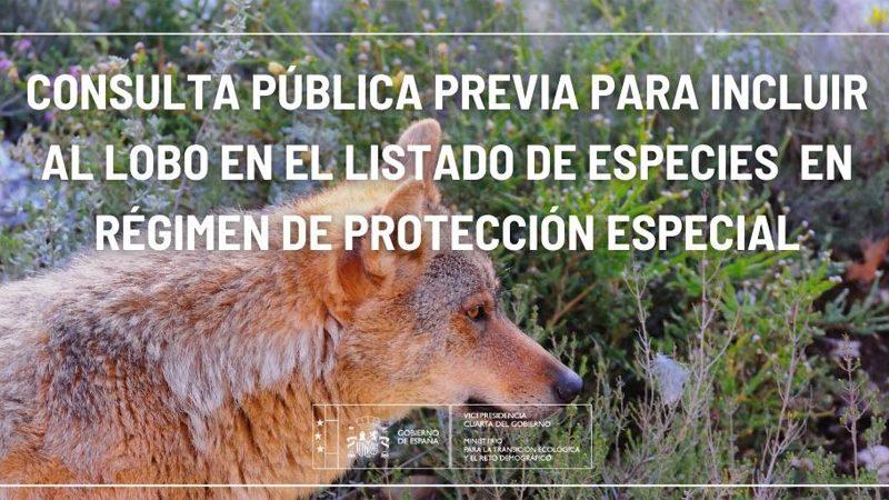 Consulta pública previa sobre el proyecto de Orden Ministerial para incluir a todas las poblaciones de lobo en el Listado de Especies Silvestres en Régimen de Protección Especial