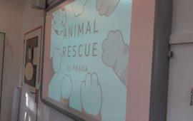 Empieza Animal Rescue un programa de sensibilización en centros educativos de menores