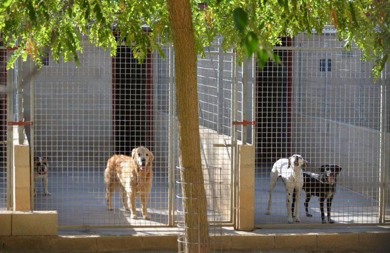 residencia canina Granja La Luna