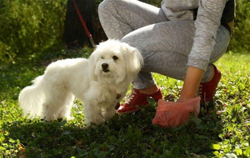 Bolsas higiénicas Recogida cacas perros