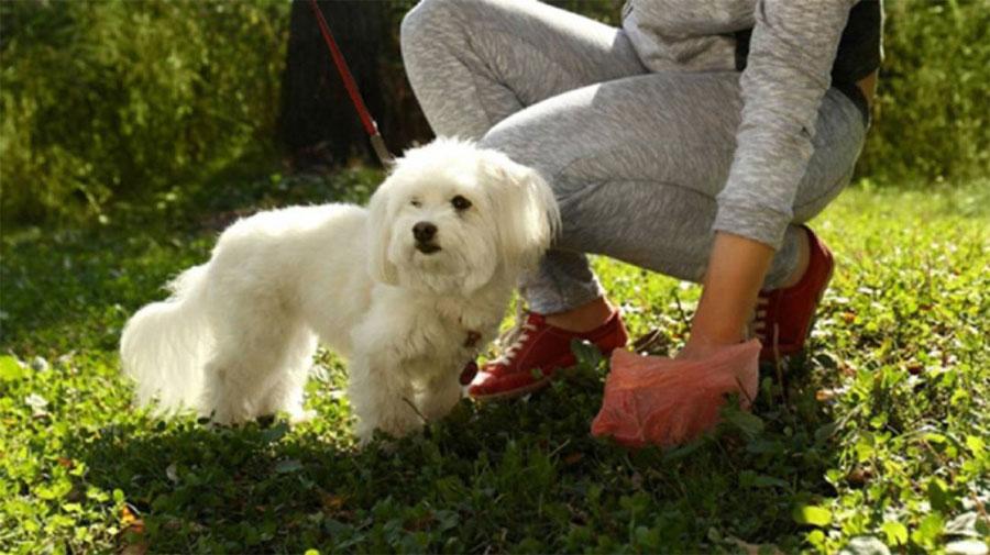 Recogida cacas perros