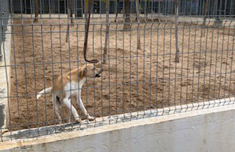 EL Ayuntamiento de Valladolid y los veterinarios colaboran por una mejora en las mascotas