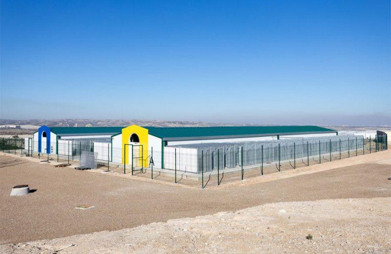El Ayuntamiento de Zaragoza atenderá las mascotas de dueños en situación de vulnerabilidad