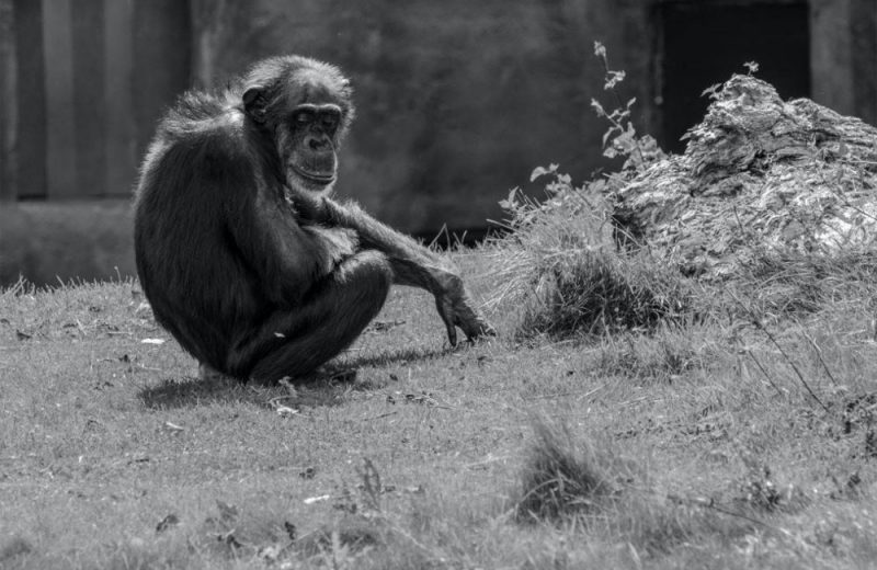 Los animales se protegen con el distanciamiento social