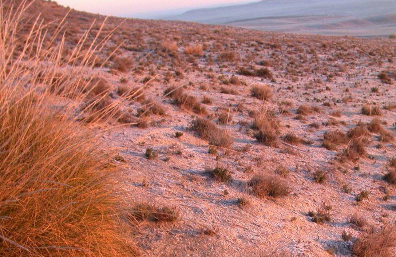 La interacción entre plantas se ve afectada por la variación del clima