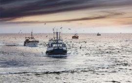 Los peces de aguas cálidas ganan terreno en el Cantábrico