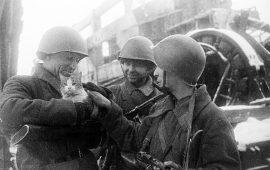 La División Maullido, los salvadores de la ciudad de Leningrado