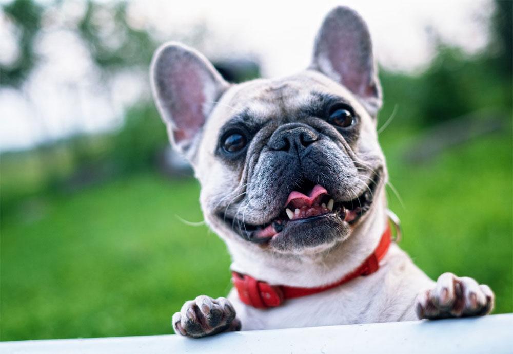 Salud en perros