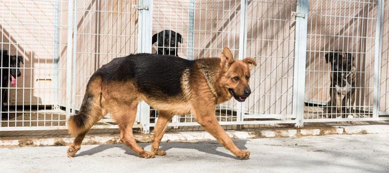 El Centro de Protección animal de Zaragoza atendió a 164 perros recogidos por toda la provincia