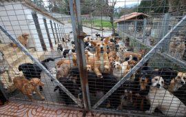 Vigo tendrá un nuevo convenio de protección y una app para poder adoptar mascotas