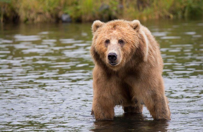 Un nueve proyecto Life facilitará la adaptación del oso cantábrico al cambio climático