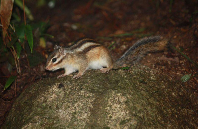 Un megaestudio muestra cómo el comercio internacional de mascotas favorece a las especies invasoras