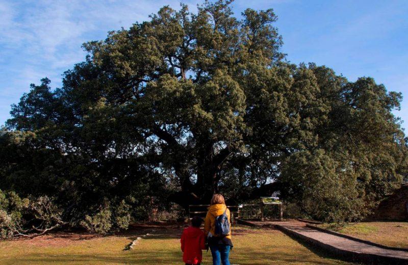 La carrasca milenaria de Huesca se alza con el galardón de árbol europeo del año