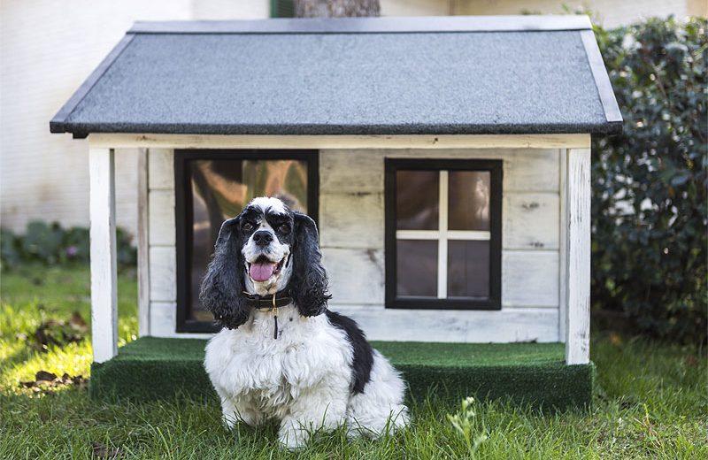 Las mejores casetas para perros en calidad-precio
