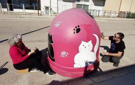 Carcaixent un municipio ético amigo de los gatos