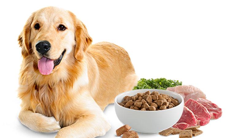 Grain Free comida perro