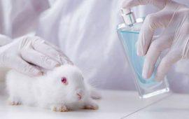 Las ONG'S solicitan a Europa que se cumpla la prohibición de no experimentar cosméticos en animales