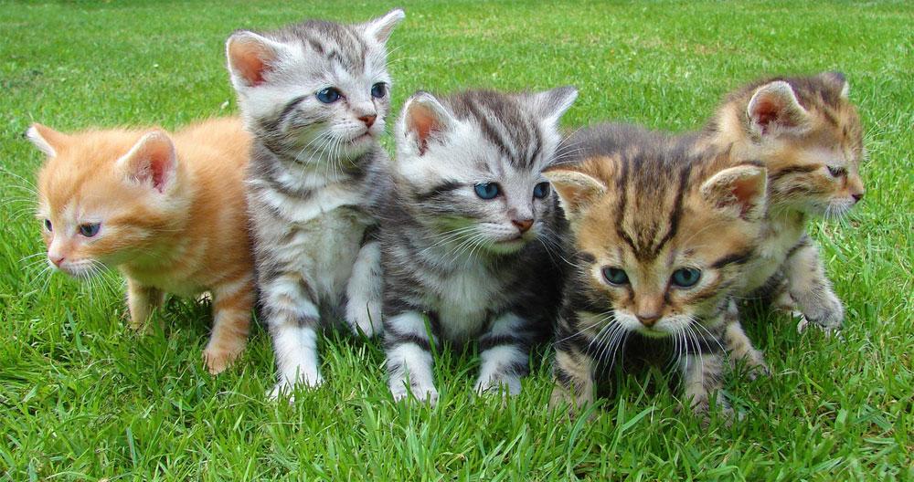 Los gatitos podrían ser la clave para comprender la enfermedad diarreica mortal en los niños