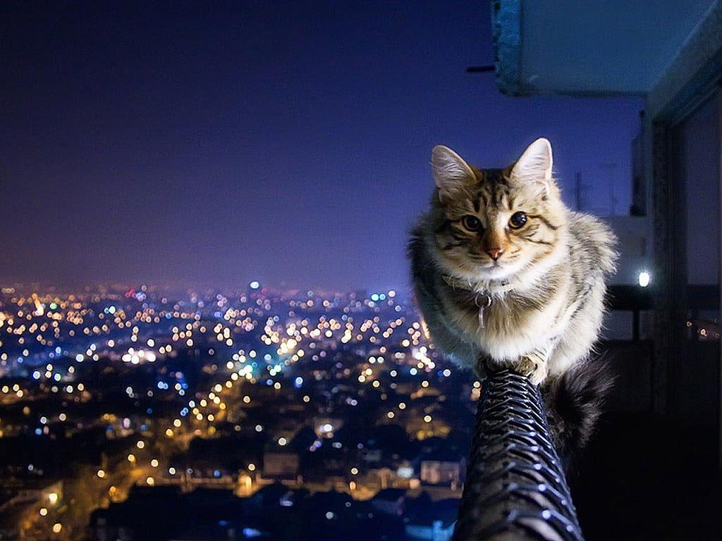 Gato ciudad