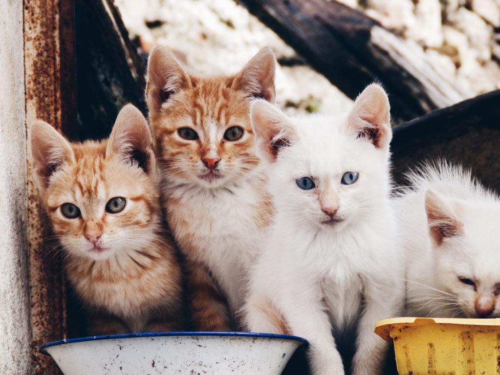 Gatos de la calle